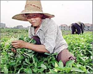 GM crops catch China's fancy
