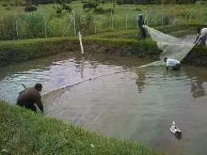 Small Scale Mining Operators To Be Trained In Fish Farming