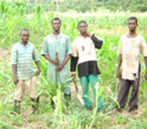 Farmers cry over 'juju' in their farms