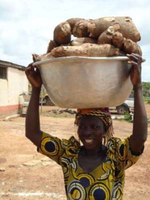 """""""Rambo root"""" could beat climate change in Sub-Saharan Africa"""