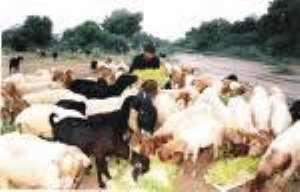 Animal health workers attend workshop