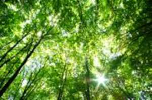 Green Climate Fund: governments requested to accelerate signing of contributions