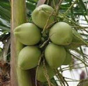 Boy 17 Dies After Teacher Forced Him To Pluck Coconut From A Coconut Tree