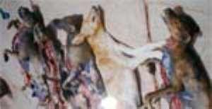DOG KHEBAB FOR SALE
