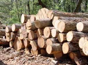 Timber Rights Evaluation Committee Inaugurated In Accra