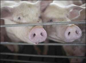 More Countries Confirm Swine Flu