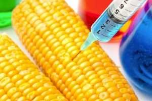 Ghana's Farmers Battle 'Monsanto Law' To Retain Seed Freedom