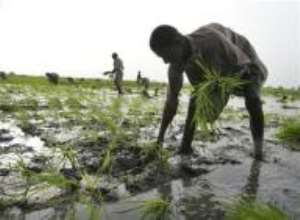 Hunger eclipsed by financial crisis on World Food Day