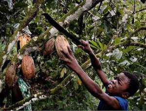 Experts meet to discuss child labour in cocoa growing areas