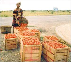 Demand For Fresh Tomato Increases