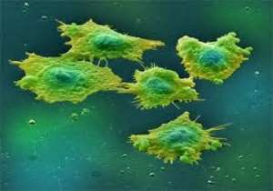 Cancer Disease, A Nightmare in Our Society: What is The Way Out?
