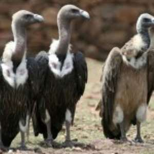 Where Are The Vultures?