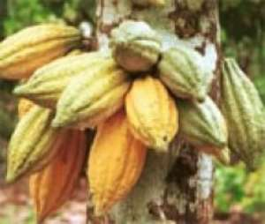 Cocoa And Forest Initiative Critical--Tropenbos Ghana