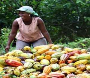 Cocoa beans to waste, as Dockers strike over poor pay