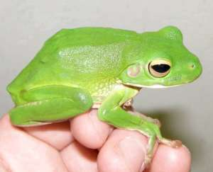 New, rare and threatened species discovered in Ghana