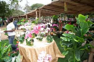 Ghana's Garden And Flower Show Offers More Than Eye Candy