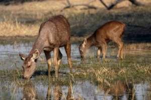 Kenya And Tanzania Lead On Animal Welfare Ranking In Africa