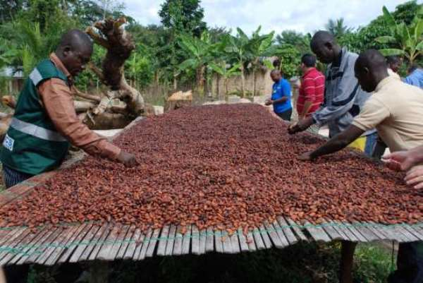 Calling on All Cocoa Farmers to Vote Massively for Nana Akufo-Addo and NPP