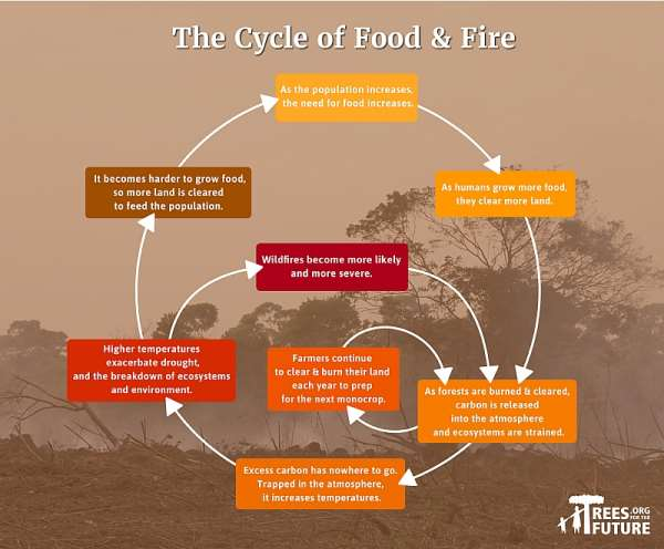 The Cycle Of Food And Fire: Australia's Wildfires Are Part Of A Vicious Cycle