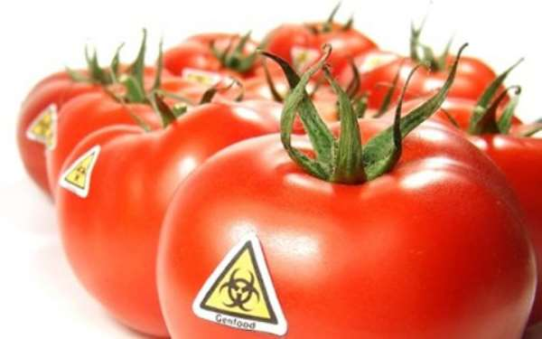 Peasant Farmers Happy With Govt Decision To Introduce GMO