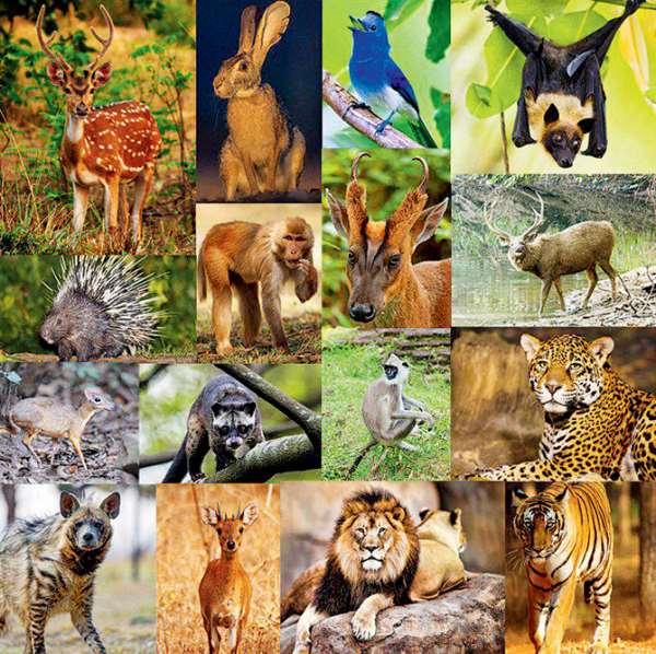 Our Vanishing World: Wildlife