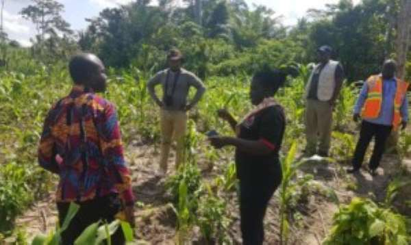 Ministry Of Food & Agric Takes Journalists Through Fall Armyworms