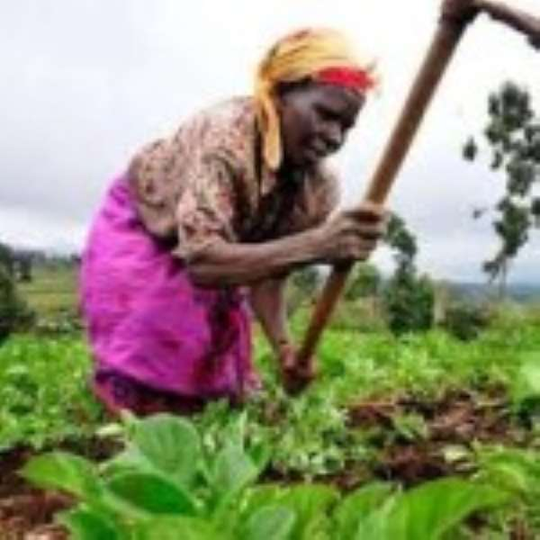 Food Sovereignty Ghana Salutes All Farmers of the Nation!