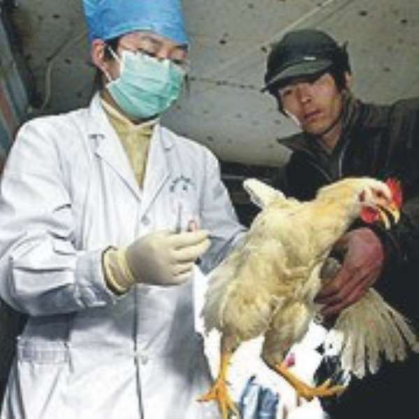 Bird flu compensation