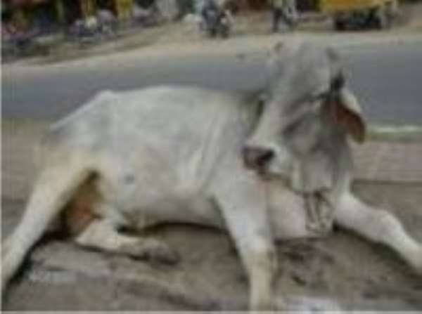 Stray cow causes accident