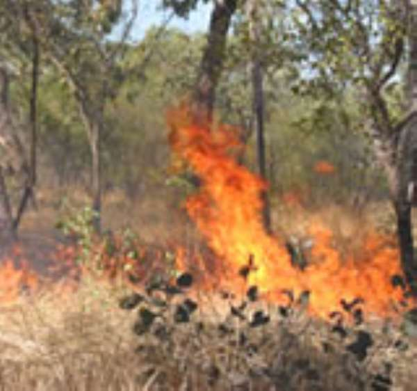 Incinerating Logic: Bush Fires and Climate Change