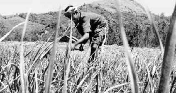 Agriculture-Led Industrialisation Is Good For Ghana