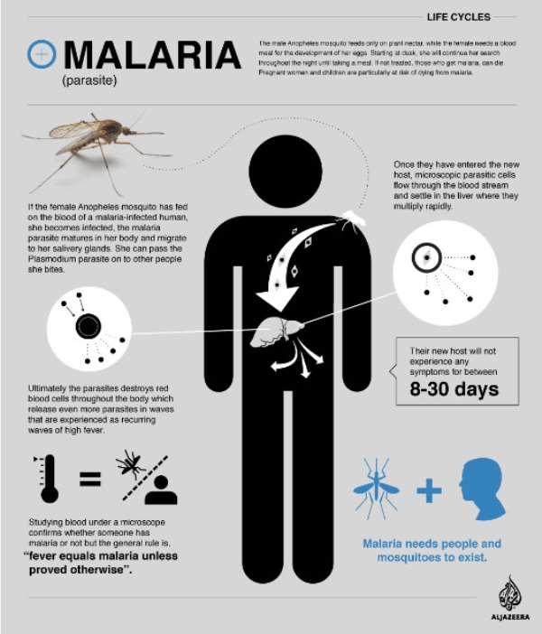 Malaria: Tanzania's End Game