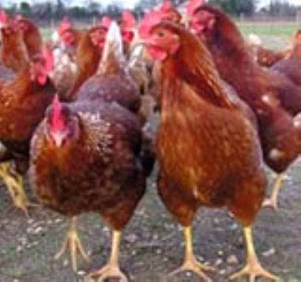 New poultry feed enhancer recommended