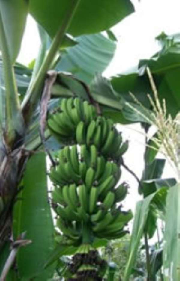 What experts say about Agriculture underdevelopment in Africa