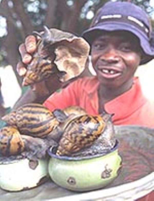 Ghana making millions from snail farming ...