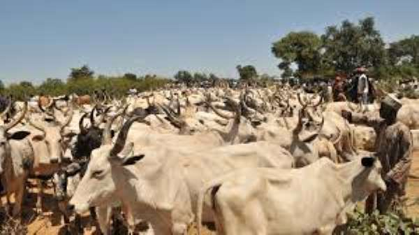 Chad Repays Angola $100m Debt With 75,000 Cows