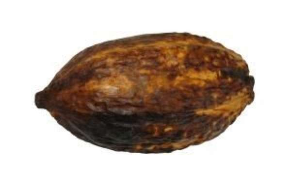 Iran to buy Ghana cocoa direct