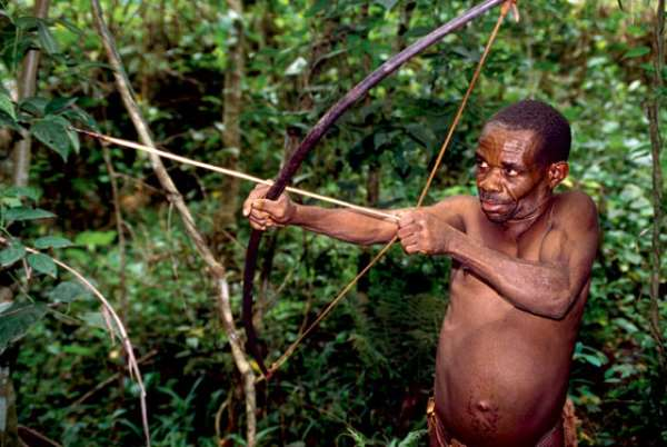 The pygmies are gradually losing their dwelling place to logging