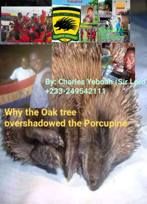 Why the Oak tree overshadowed the Porcupine