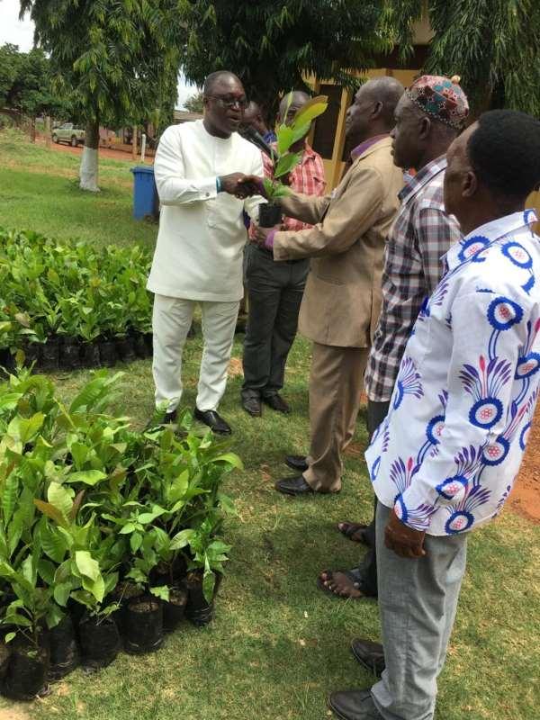 Techiman MCE Distributes 280,000 Poly- Clonial Cashew Seedlings To 1,000 Farmers