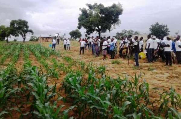 New Chemical To Combat Armyworm