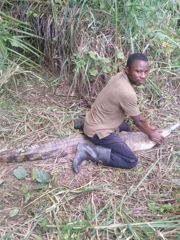 The Goodness of Crocodiles