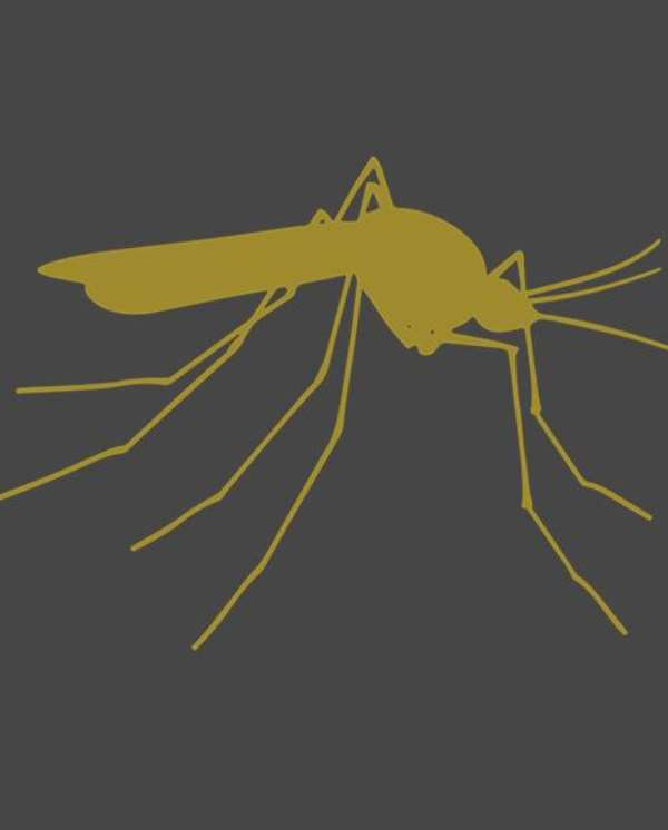 Civil Society Denounces the Release of GM mosquitoes in Burkina Faso