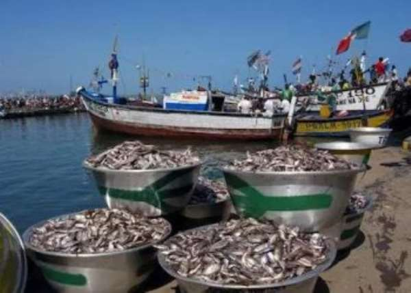 Fisheries specialist criticises Minister's decision to extend closed season at Elmina