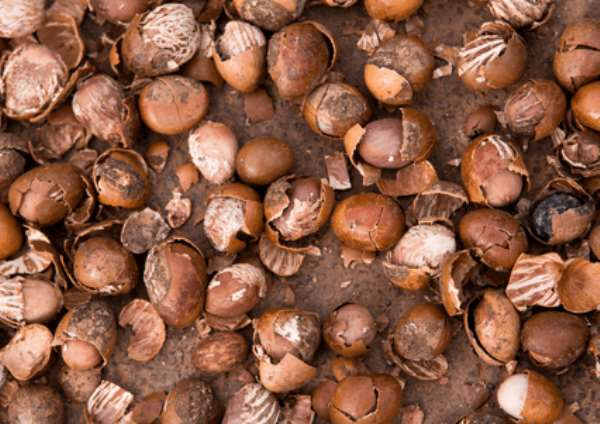 Huge potential for Ghana's wine industry as researchers develop shea wine