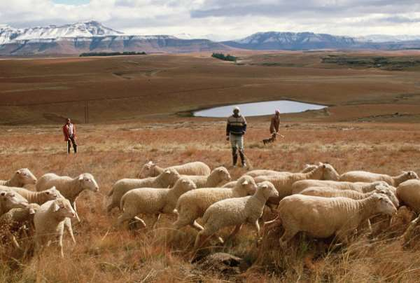 The distribution of agricultural land in South Africa remains deeply unequal. - Source: Photo by David Turnley/Corbis/VCG via Getty Images