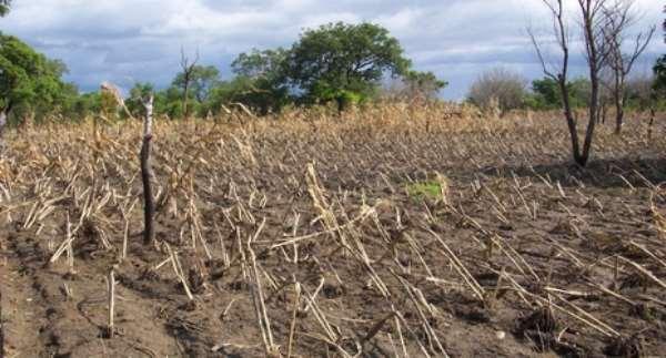 Kwahu Afram Plains: Drought Disrupts Minor Planting Season