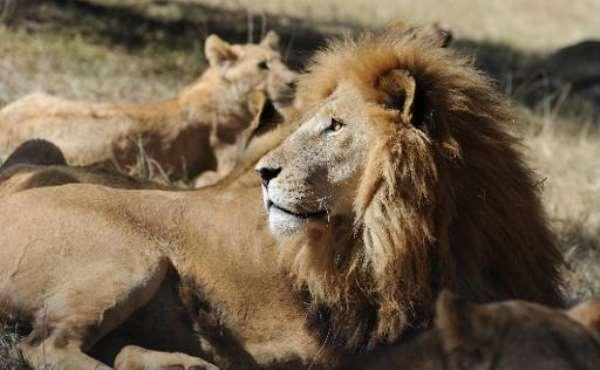 End wildlife trade; World Animal Protectionurges
