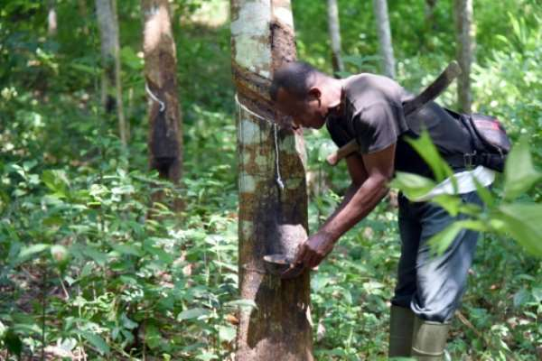 The Solution To Global Hunger & Poverty: Plant More Trees