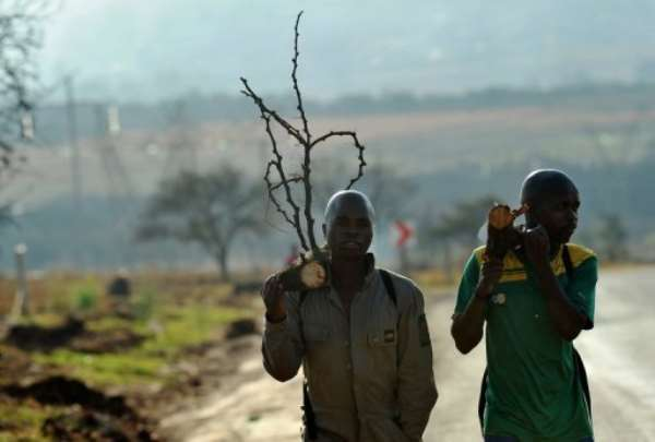South African mine workers walk home with fire wood in Carletonville on September 3, 2013.  By Alexander Joe (AFP)